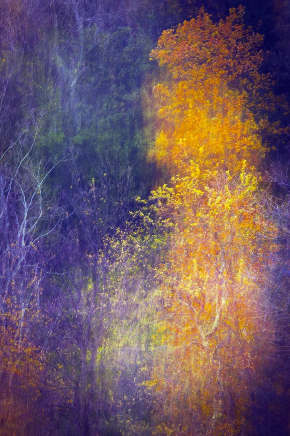 pintando el otoño - Nuria Blanco - Nuria Blanco Arenas. Nature and wildlife photographer.
