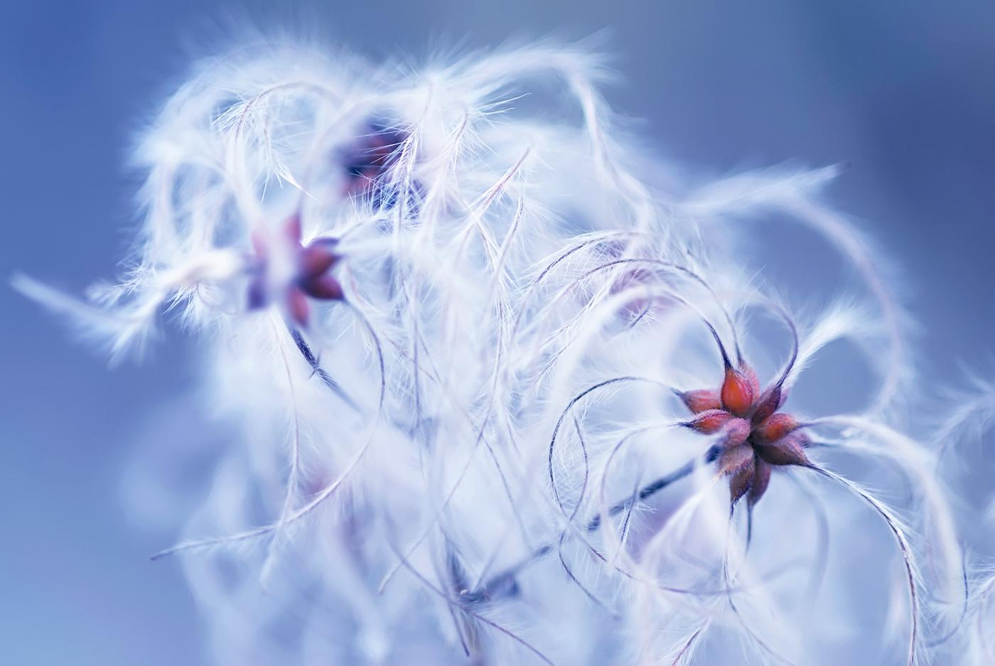 plumas al viento - Nuria Blanco - Nuria Blanco Arenas. Nature and wildlife photographer.
