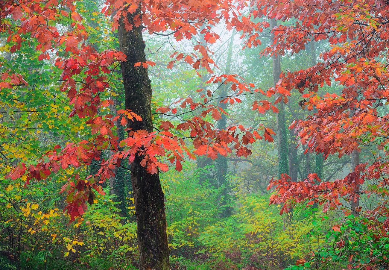 Red corner - Cesar Llaneza - Portfolio Natural, Fotografía de Naturaleza de Autor
