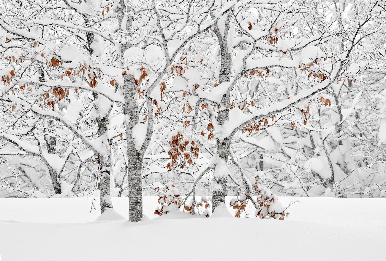 Estoics - Cesar Llaneza - Portfolio Natural, Fotografía de Naturaleza de Autor