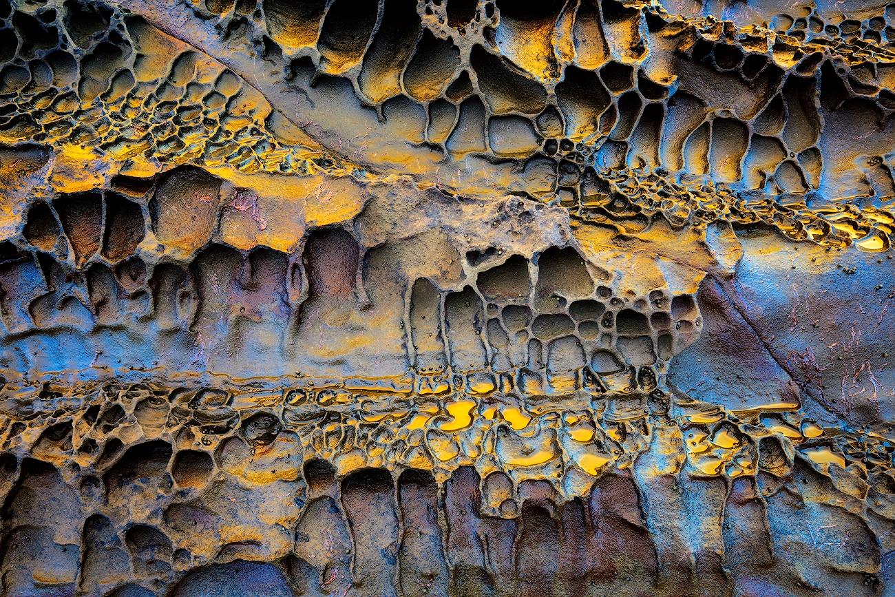 Alveolar - Cesar Llaneza - Portfolio Natural, Fotografía de Naturaleza de Autor