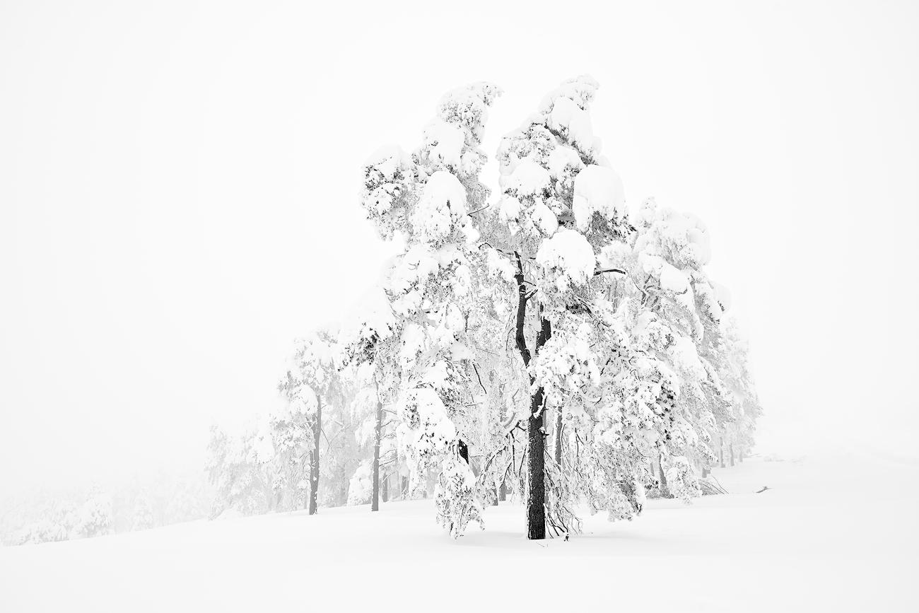 Winter front line - Cesar Llaneza - Portfolio Natural, Fotografía de Naturaleza de Autor