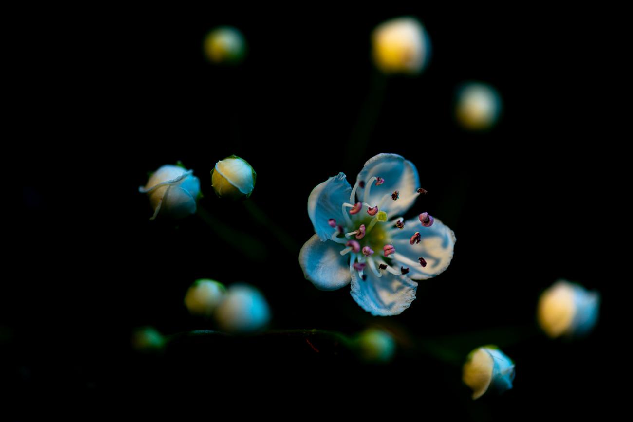 Alfonso Lalastra - Portfolio Natural, Fotografía de Naturaleza de Autor