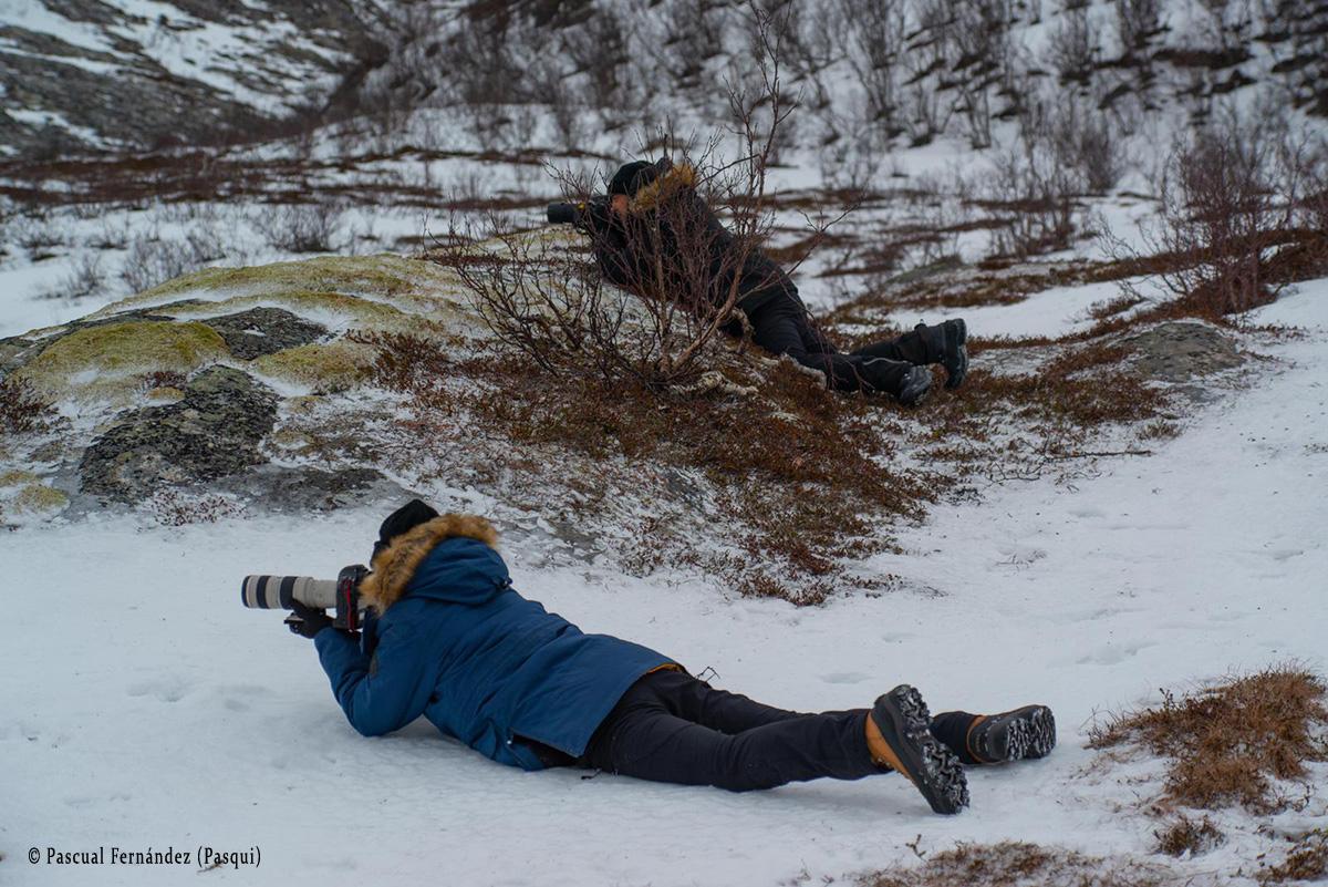 Fotografiando Renos en Brensholmen (Tromso). Noruega 2020 - Momentos - Raimon Santacatalina | Momentos