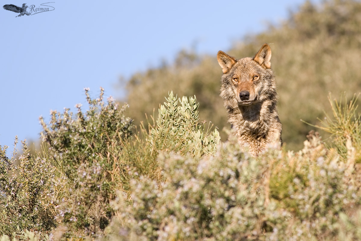 Fauna - Raimon Santacatalina | Wildlife