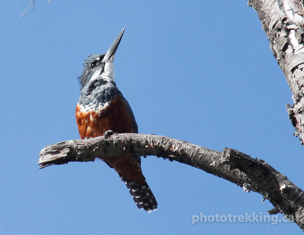 Fauna de Sud-Amèrica - Raül Carmona - Fotografia, Fotografia d'estudi, esdeveniments i Natura