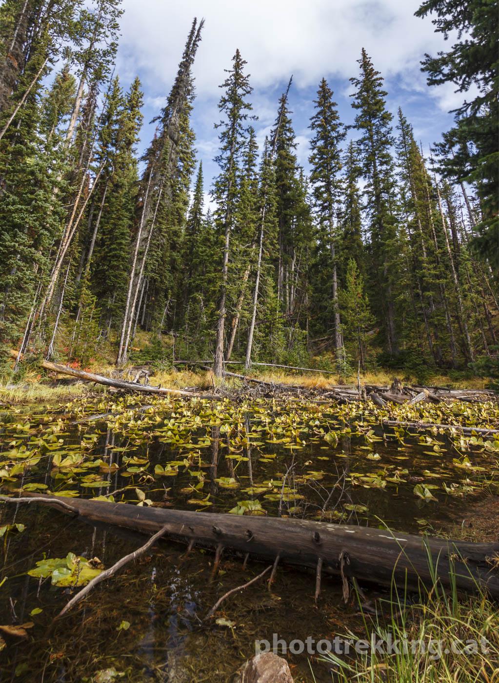 Yellowstone_Panoràmica vertical - Panoràmiques - Raül Carmona - Fotografia, Fotografia d'estudi, esdeveniments i Natura