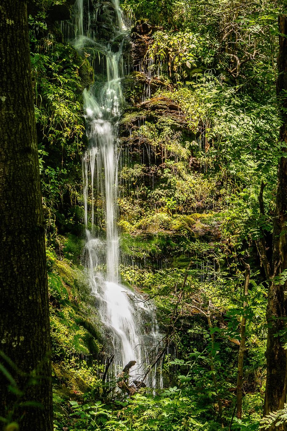 La selva del Pirineu - Fotografies de paisatges - Raül Carmona - Fotografia, Fotografia d'estudi, esdeveniments i Natura