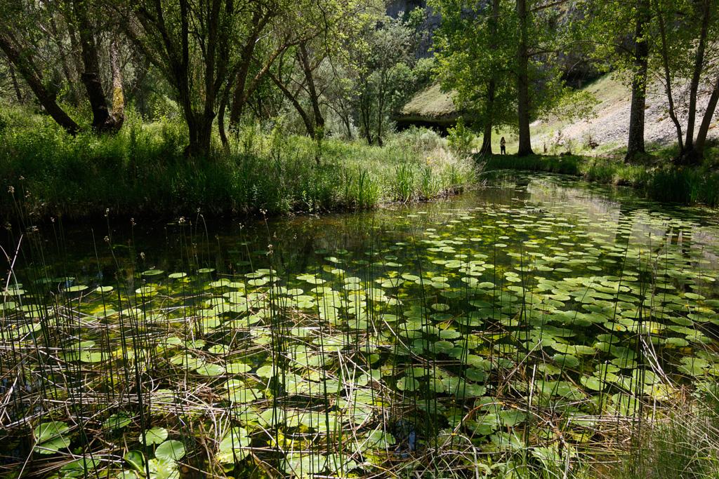 Nenúfars - Fotografies de paisatges - Raül Carmona - Fotografia, Fotografia d'estudi, esdeveniments i Natura