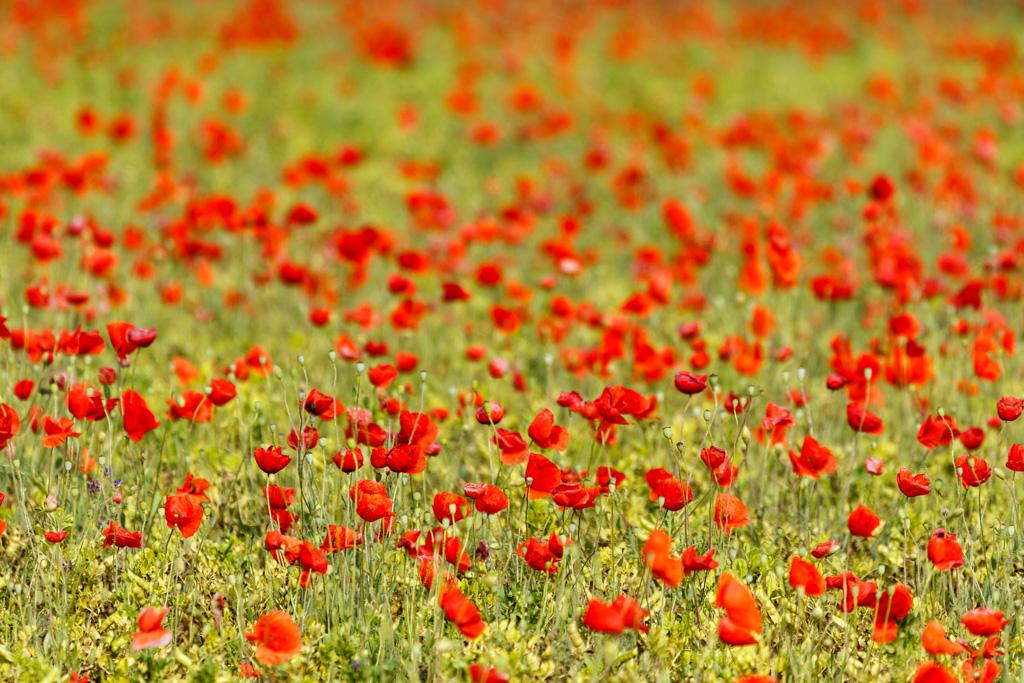 Rosselles - Fotografies de paisatges - Raül Carmona - Fotografia, Fotografia d'estudi, esdeveniments i Natura
