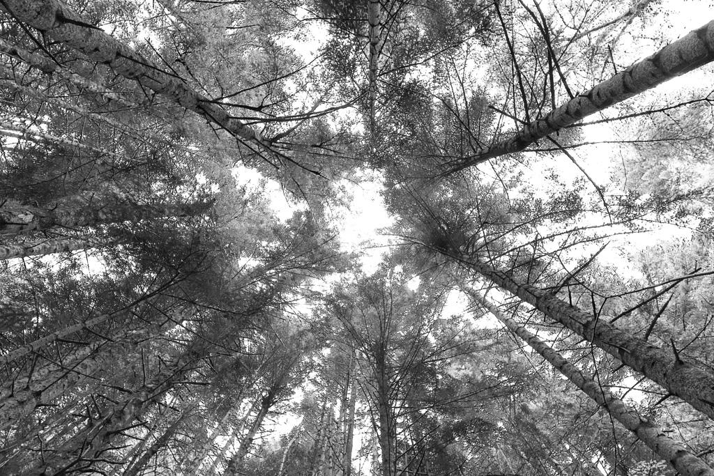 Hexàgon - Fotografies de paisatges - Raül Carmona - Fotografia, Fotografia d'estudi, esdeveniments i Natura