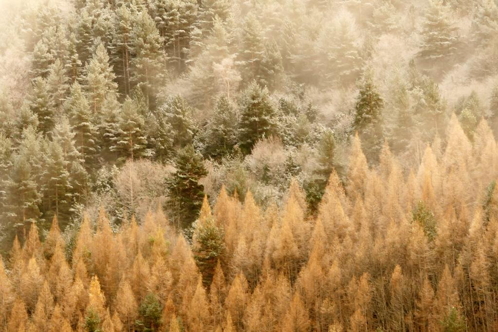 Ocres - Fotografies de paisatges - Raül Carmona - Fotografia, Fotografia d'estudi, esdeveniments i Natura