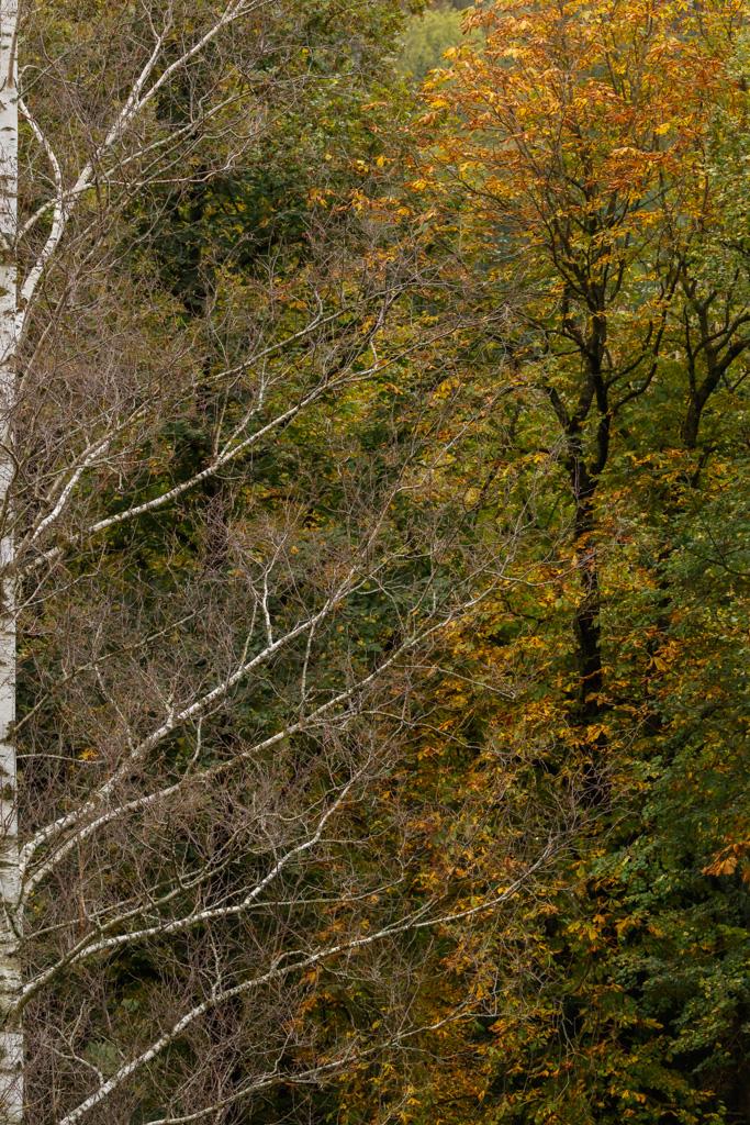 Diferents flores - Fotografies de paisatges - Raül Carmona - Fotografia, Fotografia d'estudi, esdeveniments i Natura