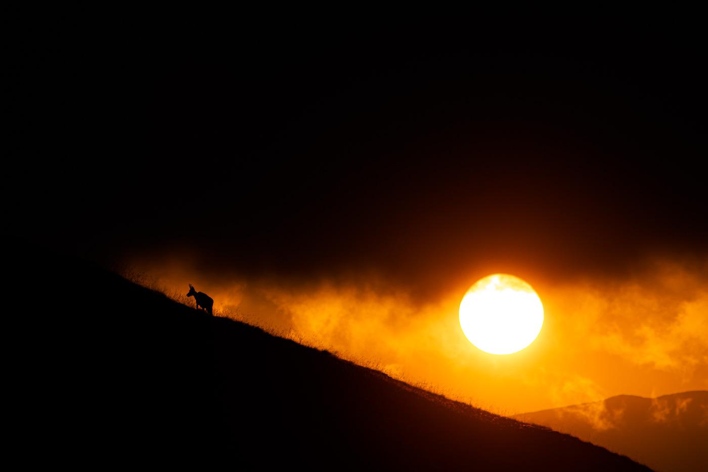 Isard al Tres Pics - Fotografies de paisatges - Raül Carmona - Fotografia, Fotografia d'estudi, esdeveniments i Natura