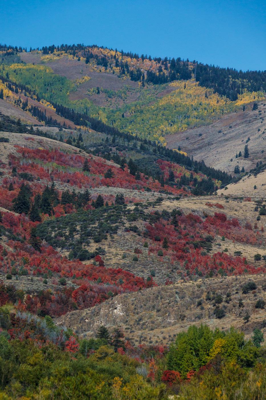 Spotted fall colors - Paisatges de Nord-Amèrica - Raül Carmona - Fotografia, Fotografia d'estudi, esdeveniments i Natura