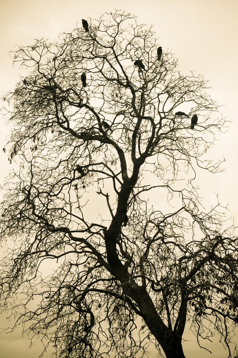 No leafs but birds - Paisatges de Nord-Amèrica - Raül Carmona - Fotografia, Fotografia d'estudi, esdeveniments i Natura