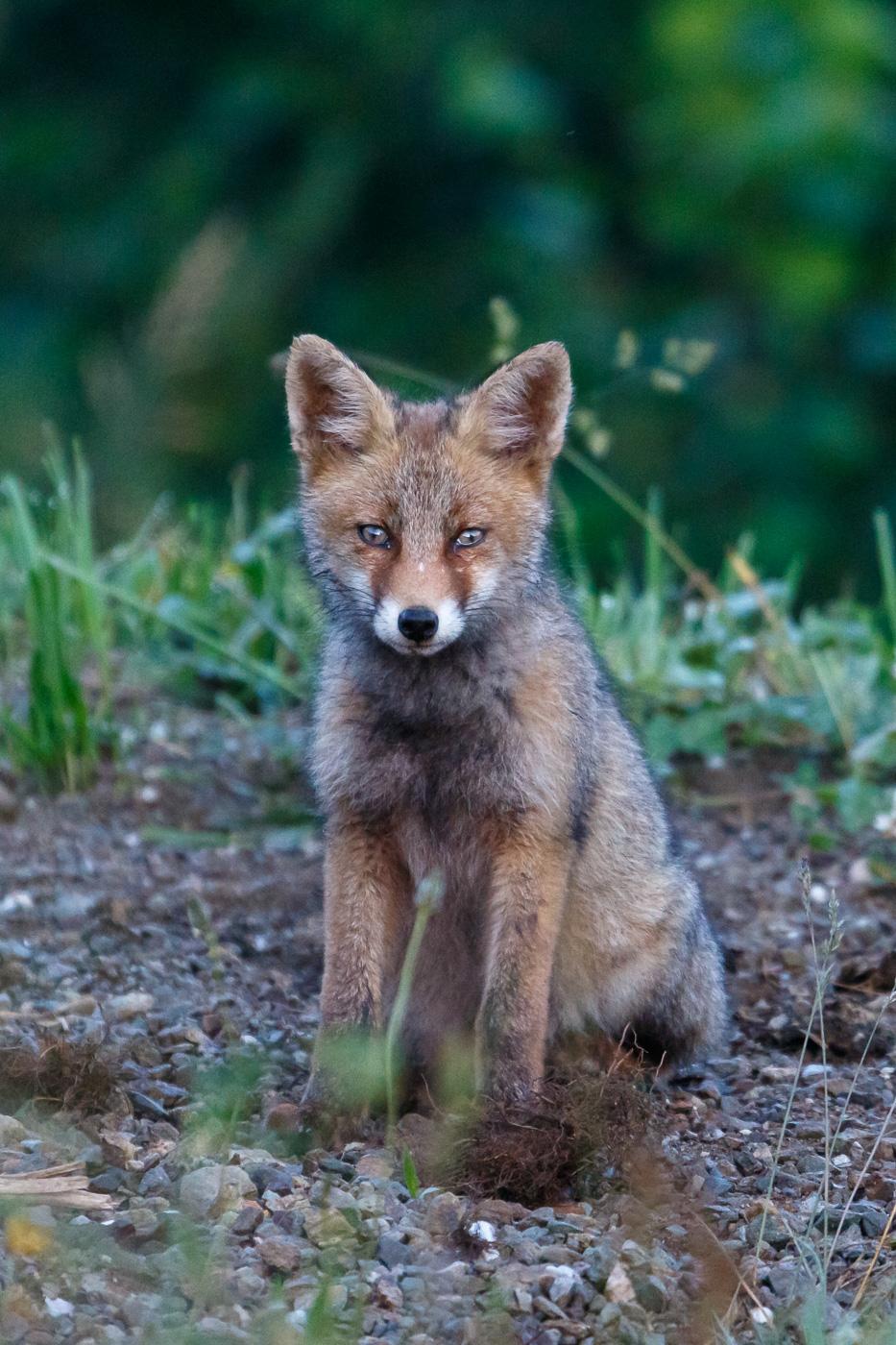 La guineueta, no el barri - Fauna salvatge - Raül Carmona - Fotografia, Fotografia d'estudi, esdeveniments i Natura