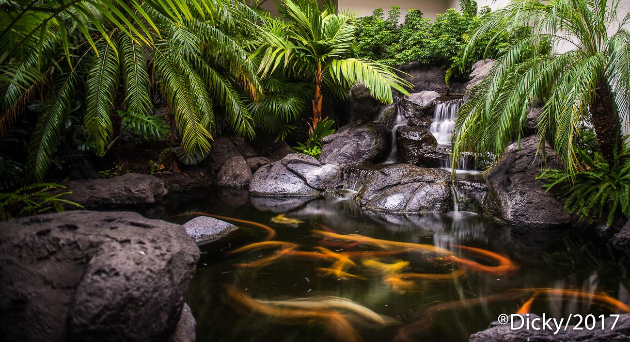 Cascada, Hawaii - Hawaii - Ricardo F. Simán, Fotografía