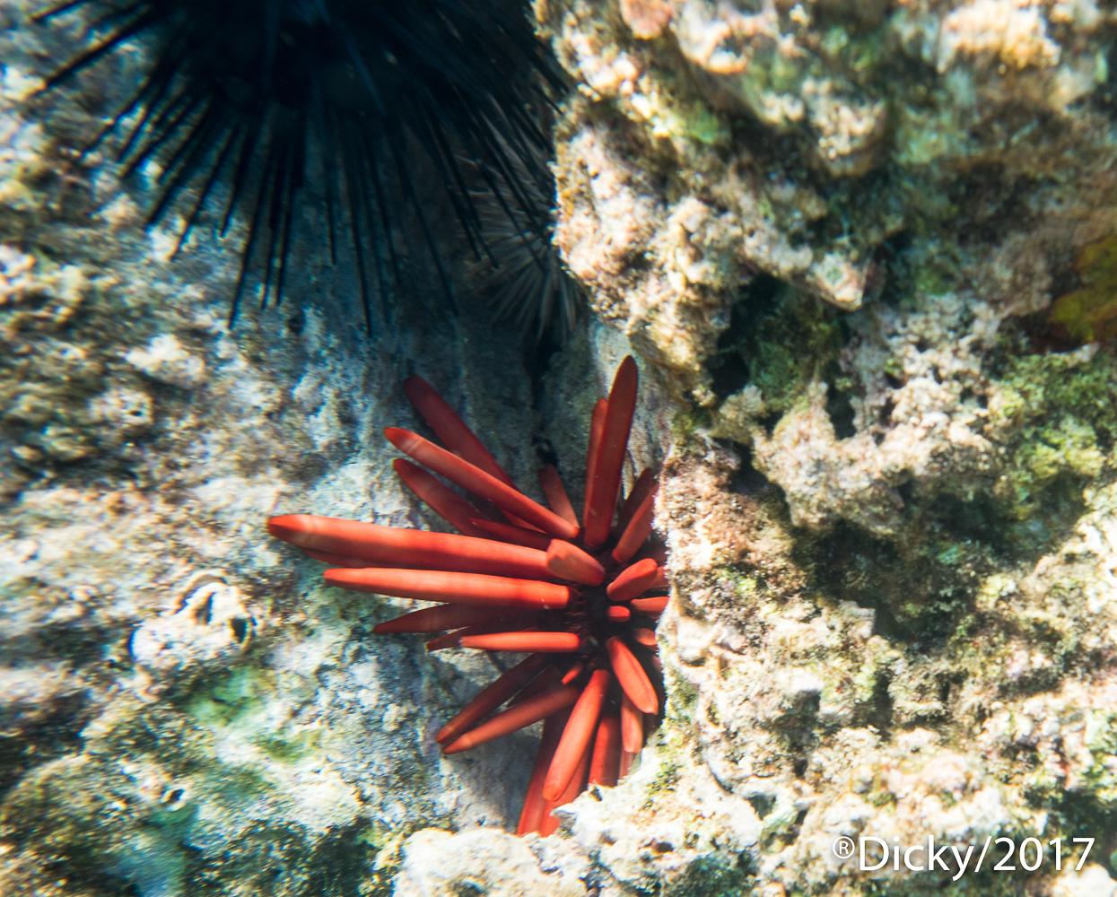 Arrecife, Maui - Hawaii - Ricardo F. Simán, Fotografía