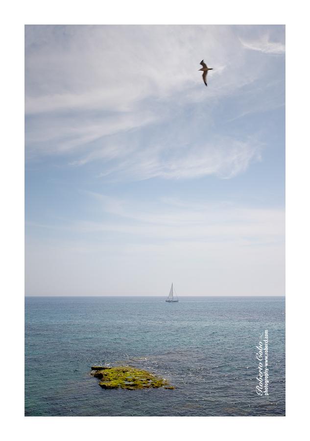 Nature - Roberto Cobo - Fotografía de Naturaleza