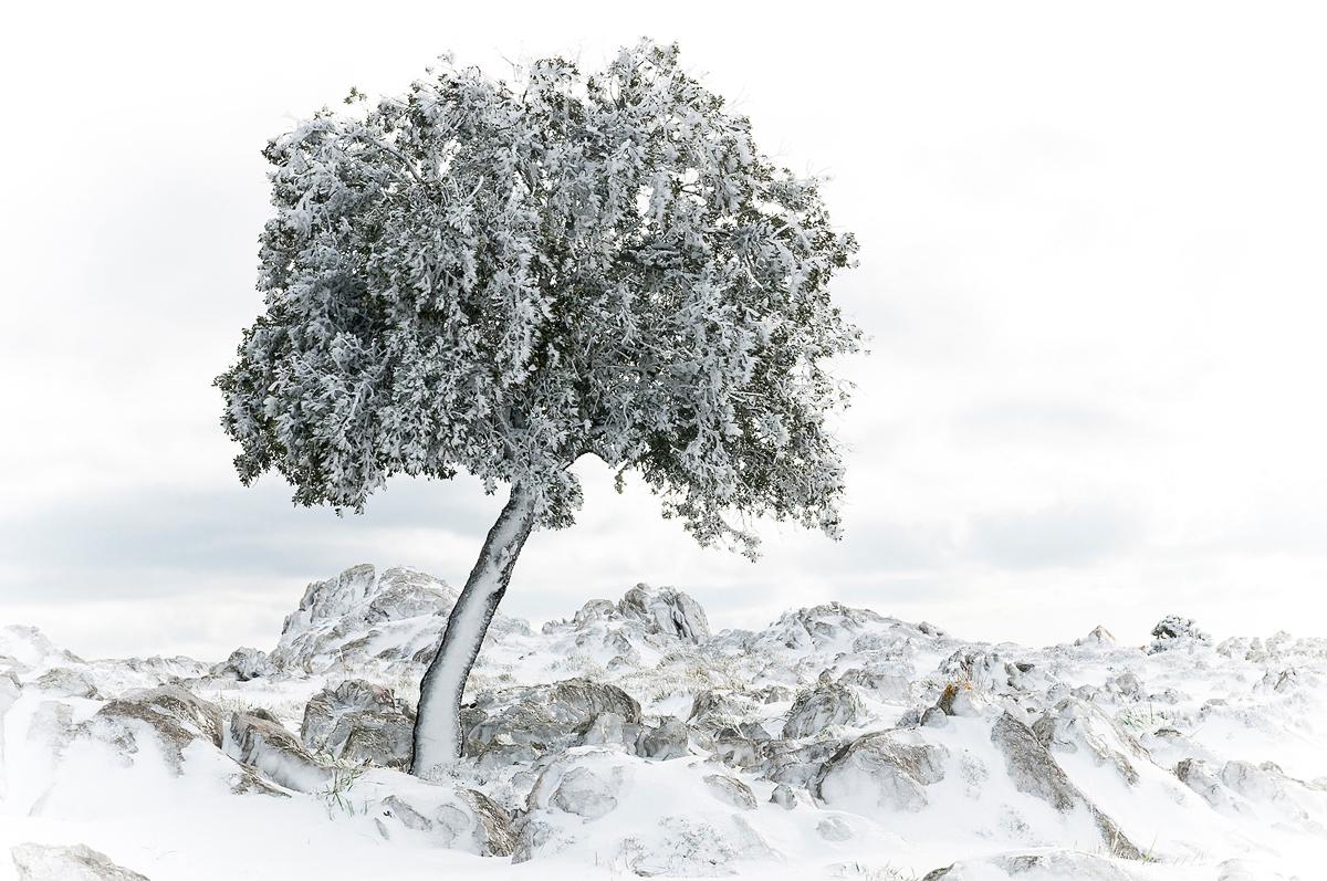Silencios de invierno - Inicio - Rosana Pita, fotografía