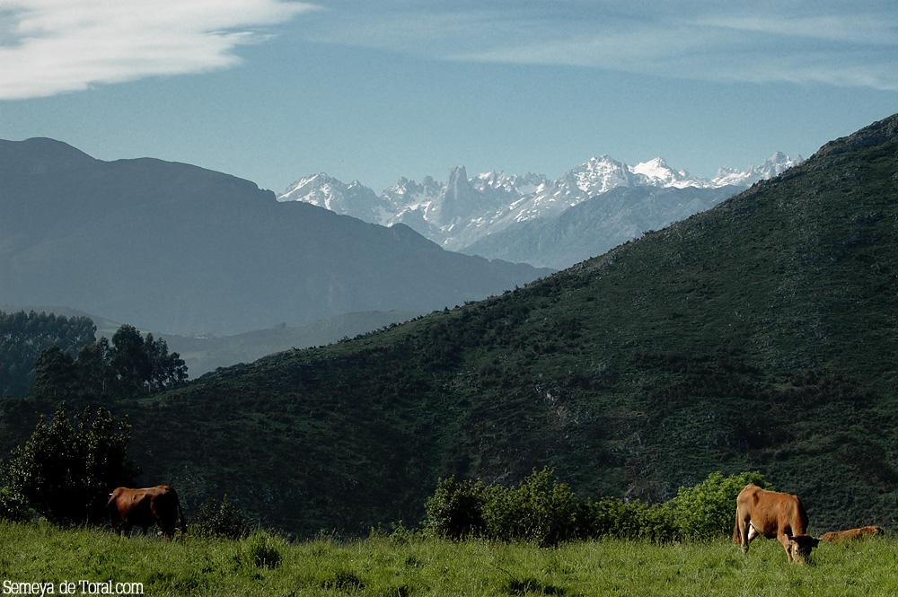 A la dura luz del día, desde Llanes, el picu majestuoso. - Picu Urriellu - Semeya  de Toral