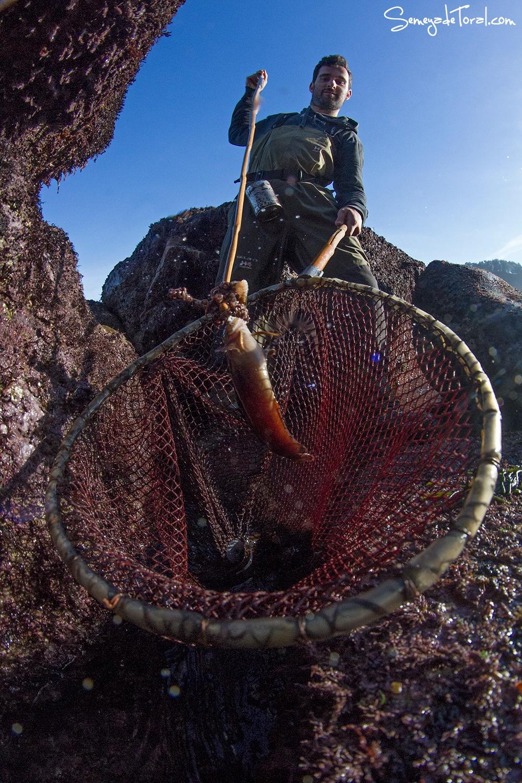 Esto buscamos en el pedreru. - Pesca tradicional de Barbaes - Semeya  de Toral