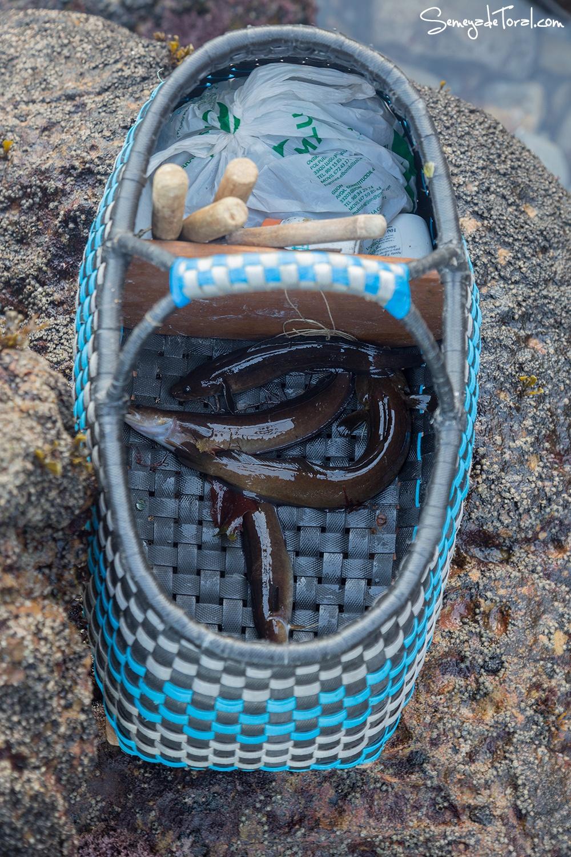 Van saliendo, van. - Pesca tradicional de Barbaes - Semeya  de Toral