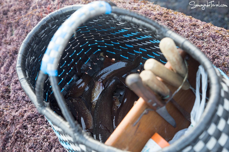 Siguen saliendo, va bien. - Pesca tradicional de Barbaes - Semeya  de Toral