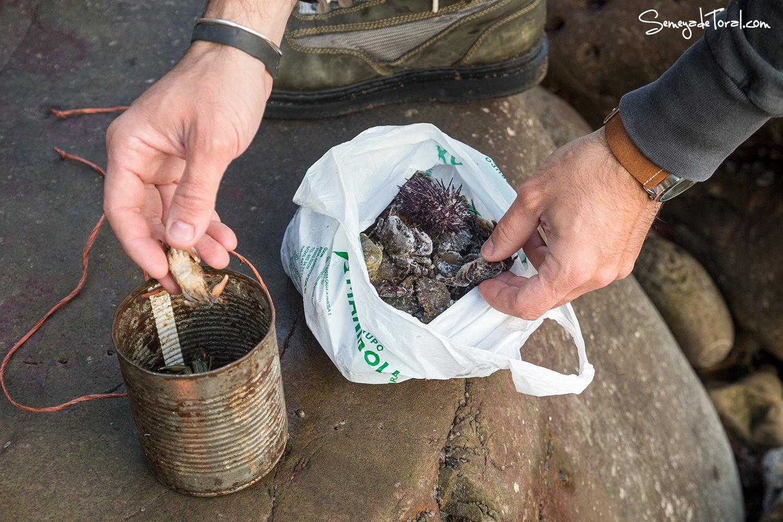 Oricios, cambaros para fabricar atrayente. - Pesca tradicional de Barbaes - Semeya  de Toral