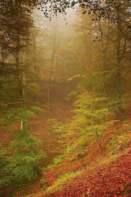 Dentro del bosque. - RÍOS Y BOSQUES - Semeya  de Toral
