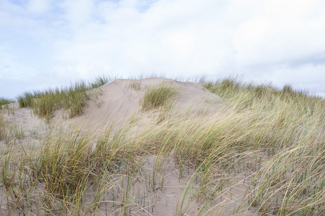 estudio 7238 - dunas en Salinas.-dunes in Salinas-. 2018 - senén merino, photograph
