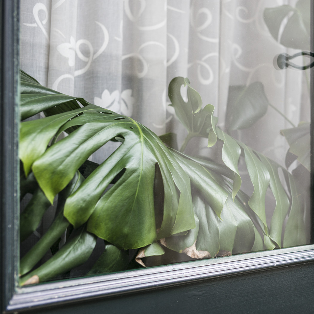estudio 1633. Allariz. 2014 - detrás del reflejo.-behind the reflection- - senén merino, photograph
