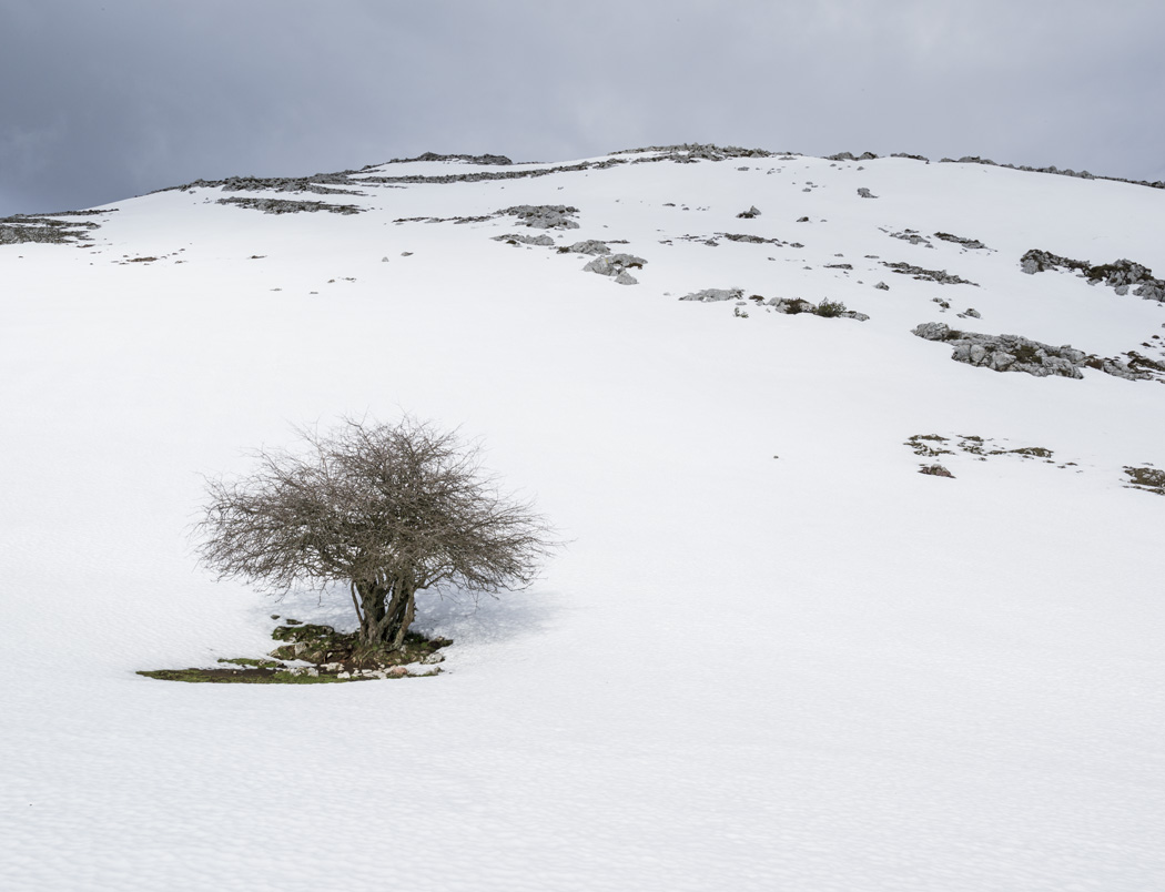 estudio 446. Gamoniteiru. 2015 - SNOW color - senén merino, photograph
