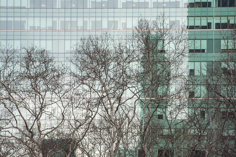 N e w   Y o r k - naturaleza urbana - Nuria Murillo Lara naturaleza urbana