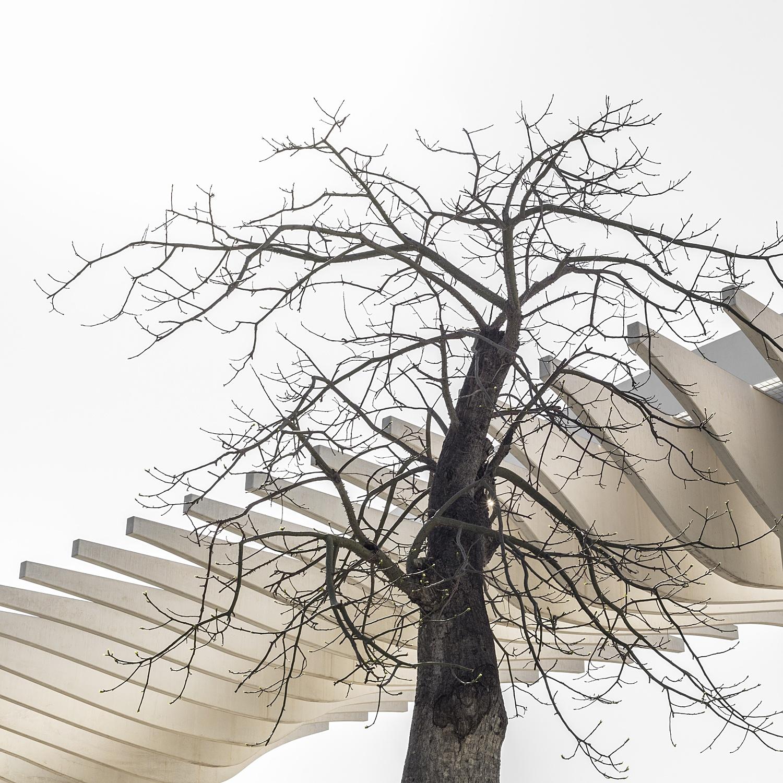 M á l a g a - naturaleza urbana - Nuria Murillo Lara naturaleza urbana