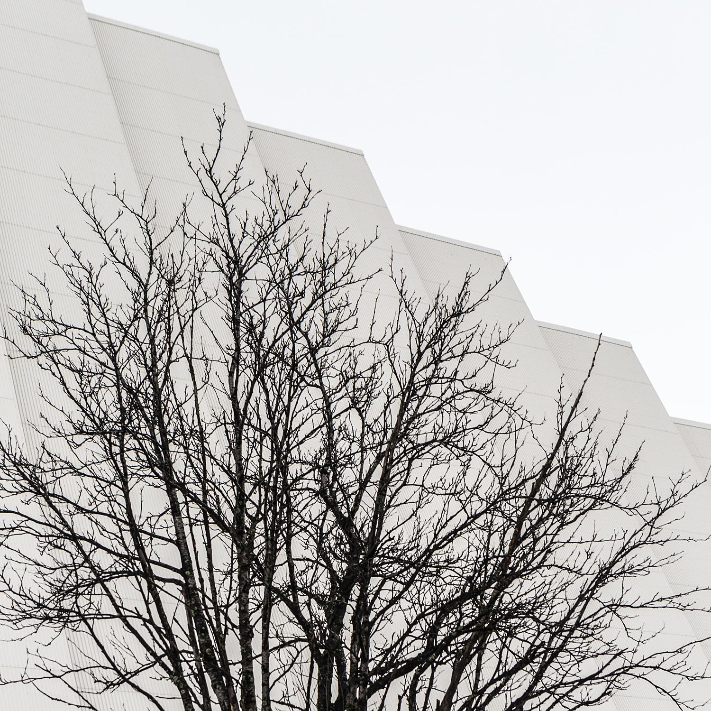 T r o m s ø - naturaleza urbana - Nuria Murillo Lara naturaleza urbana