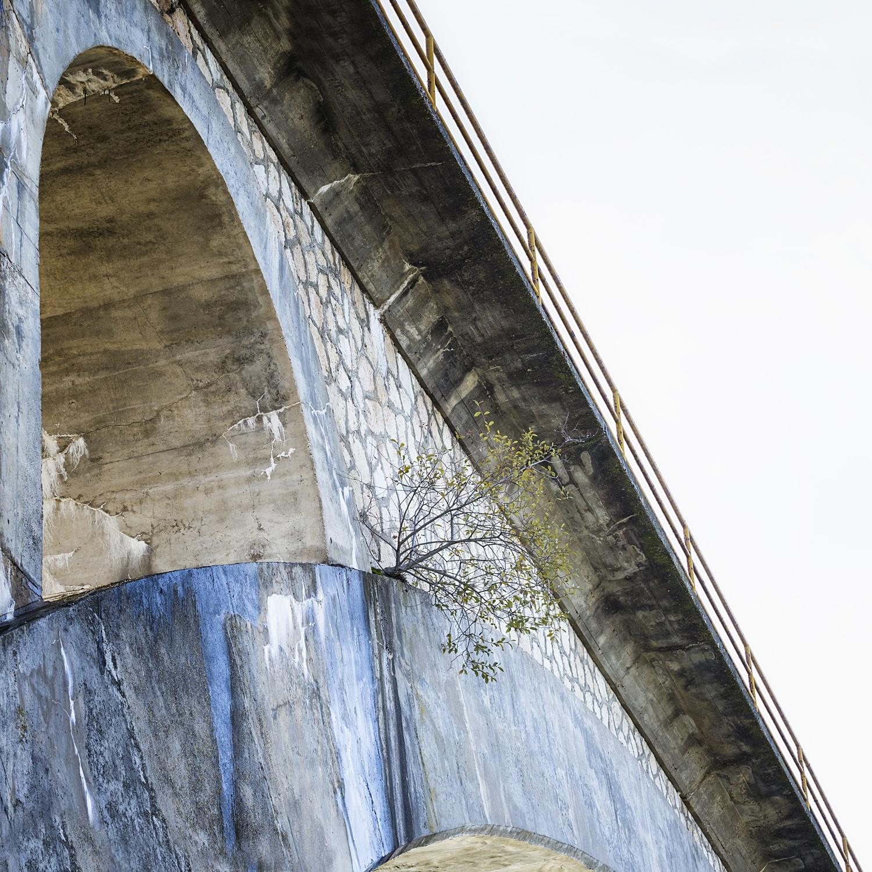 A r a n d a   d e   D u e r o - naturaleza urbana - Nuria Murillo Lara naturaleza urbana