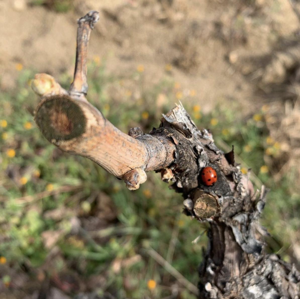 Soto Manrique - totselecta, vins i gourmet
