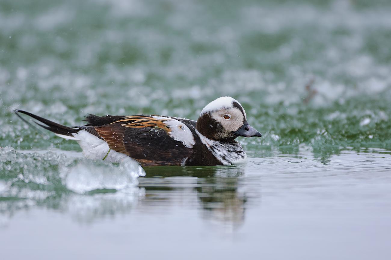 Tundra - Birds & Habitats, Jose Manuel Grandío
