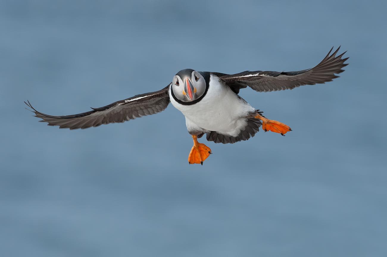 Coast - Birds & Habitats, Jose Manuel Grandío