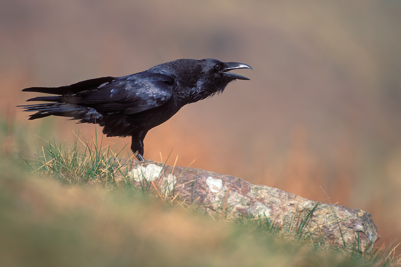 Mountain - Birds & Habitats, Jose Manuel Grandío