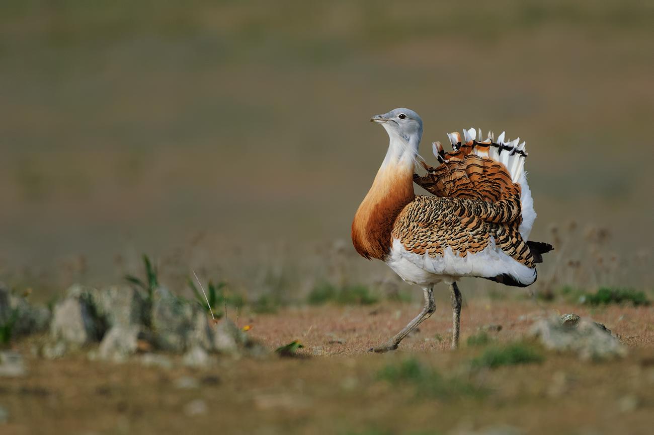 Farmland - Birds & Habitats, Jose Manuel Grandío