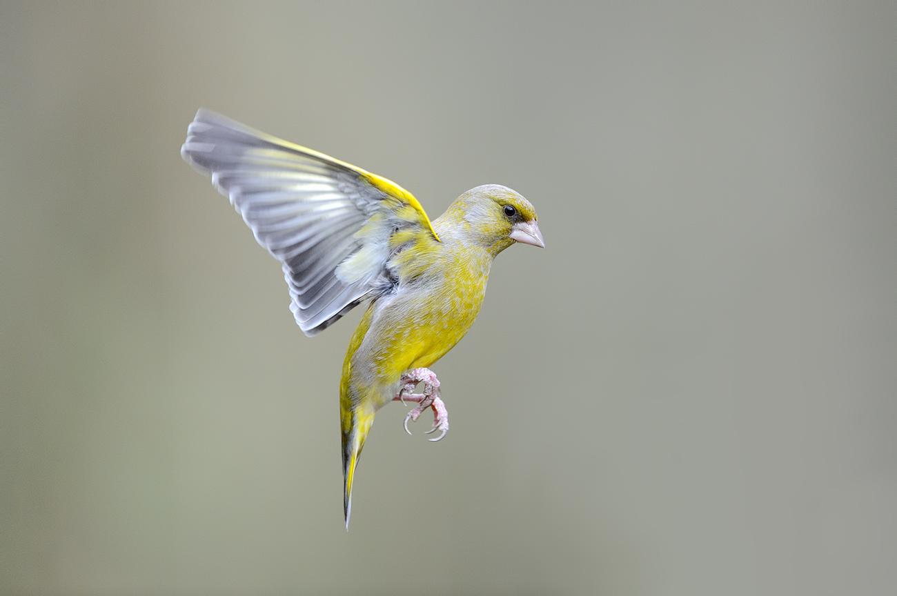 Field - Birds & Habitats, Jose Manuel Grandío