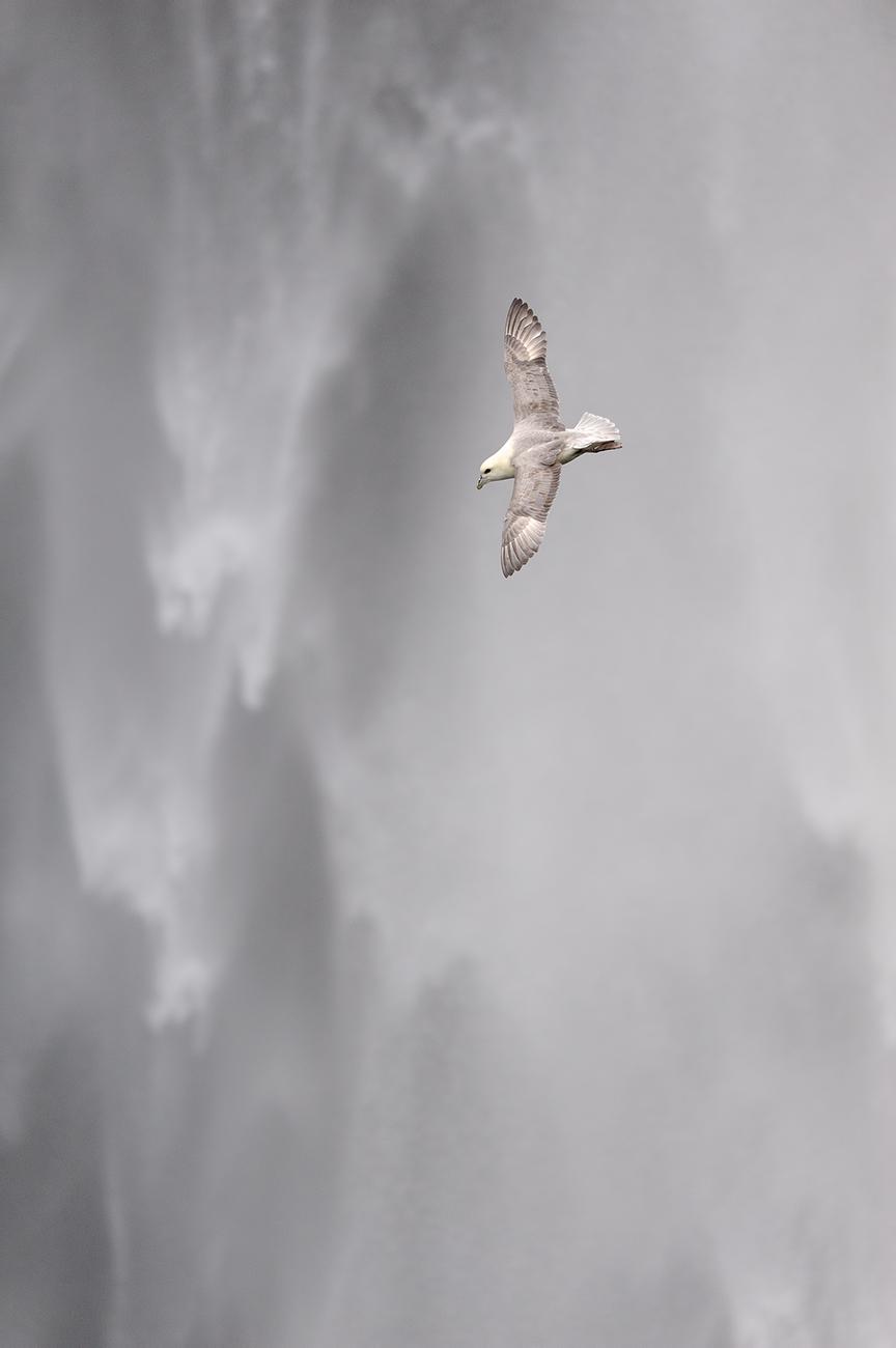 FotoAves 2010 (Spain) - Winner Birds of the World Category - Awards - Birds & Habitats, Jose Manuel Grandío