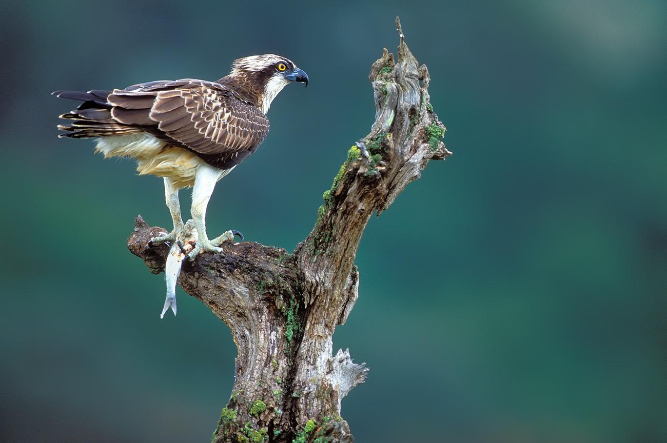 Wetland - Birds & Habitats, Jose Manuel Grandío