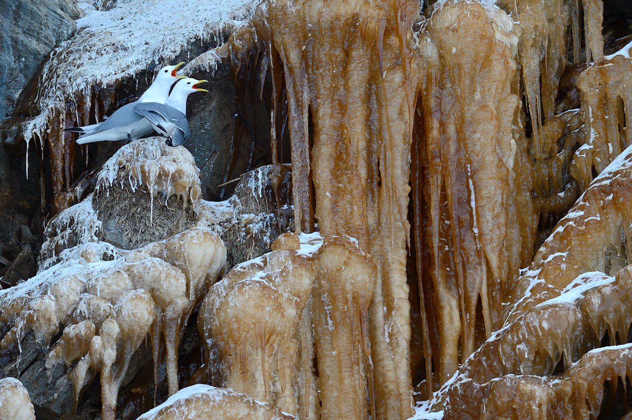 2 - Birds & Habitats, Jose Manuel Grandío