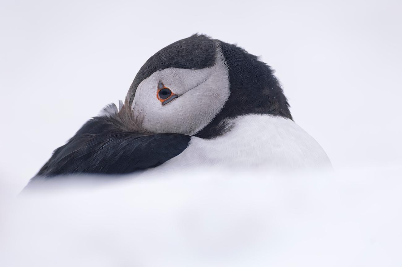 Face to face - Birds & Habitats, Jose Manuel Grandío