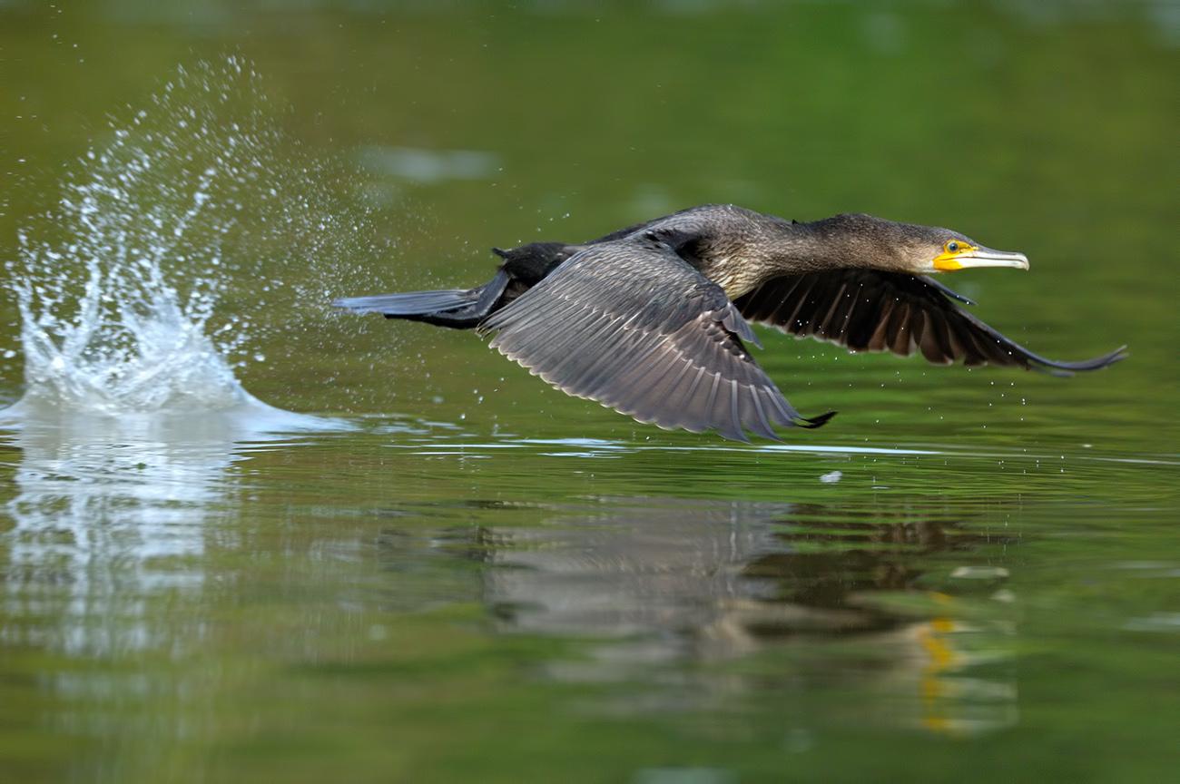 In the air - Birds & Habitats, Jose Manuel Grandío