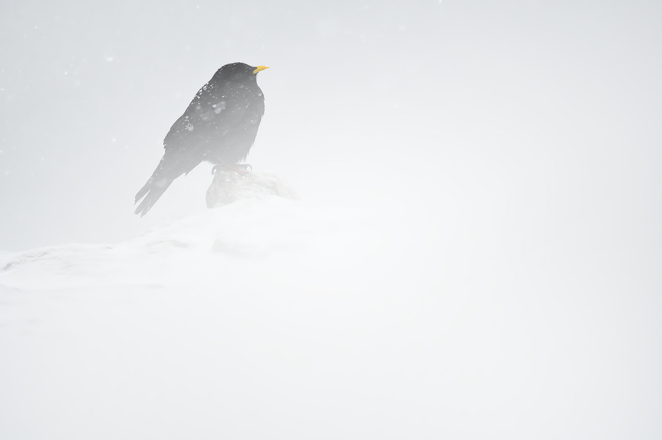 Below Zero - Birds & Habitats, Jose Manuel Grandío